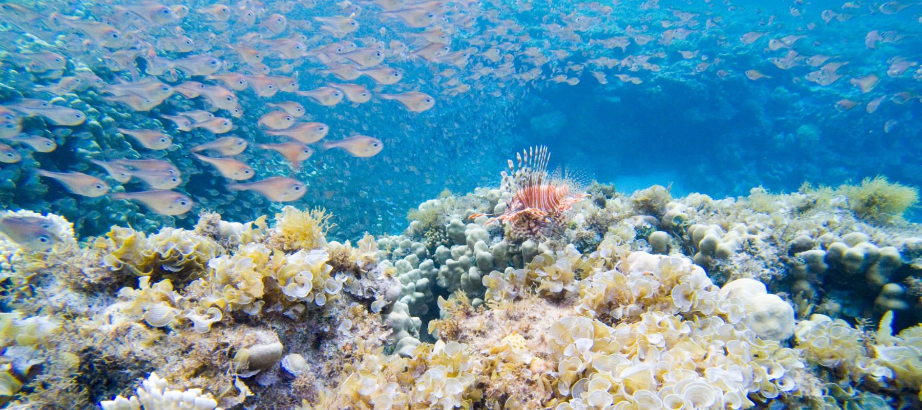 Valoración de los servicios ecosistémicos marinos